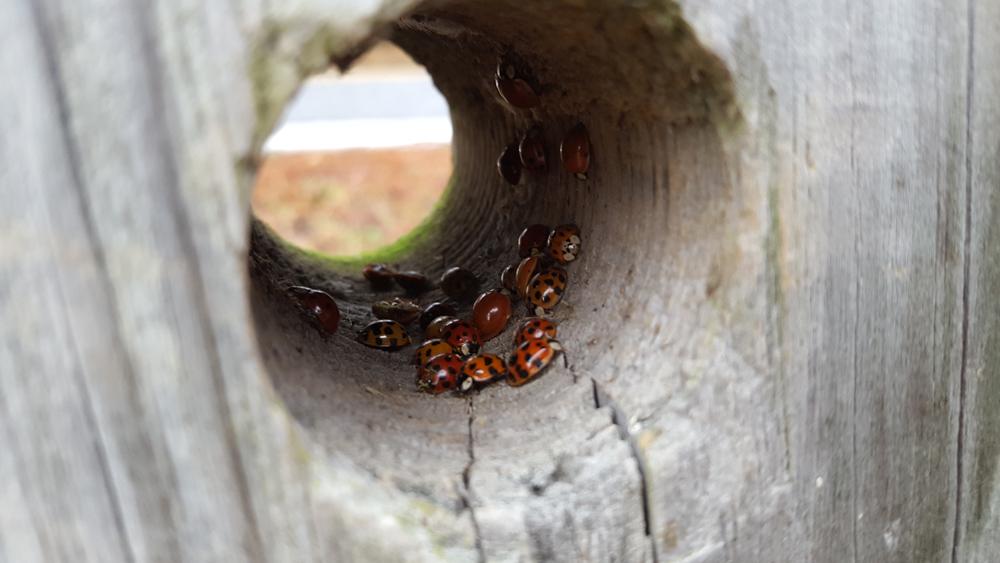 JPWave - Ladybug Picnic
